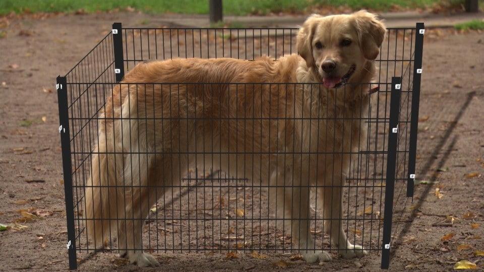 漢堡市政廳狗公園起完圍欄又拆 拆完又起遭恥笑